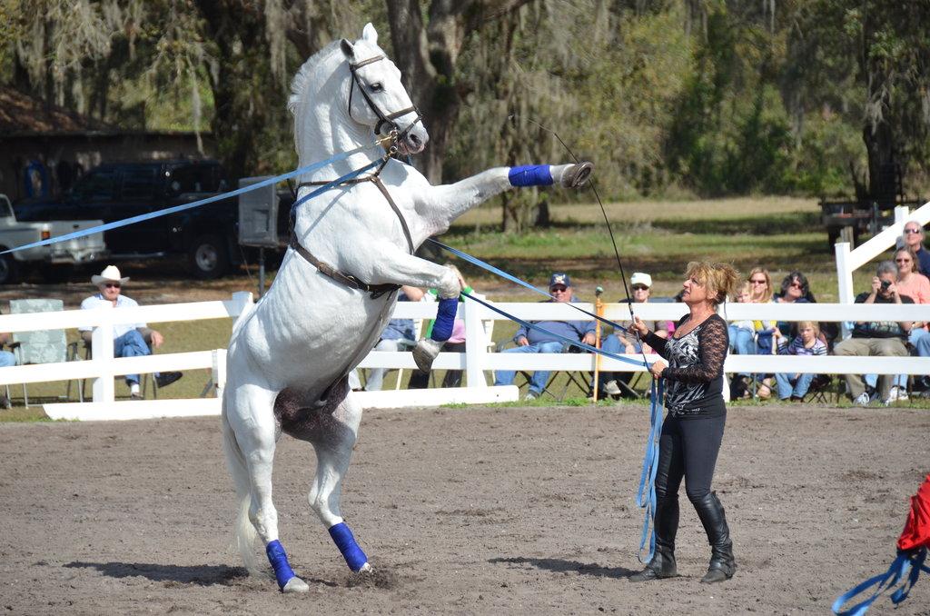 Lipizzan Horse Info Origin History Pictures