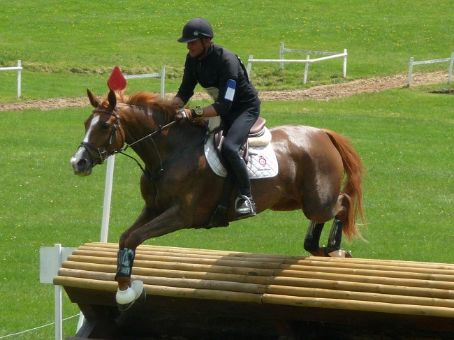 Sardinian Anglo-Arab Horse Info, Origin, History, Pictures ...