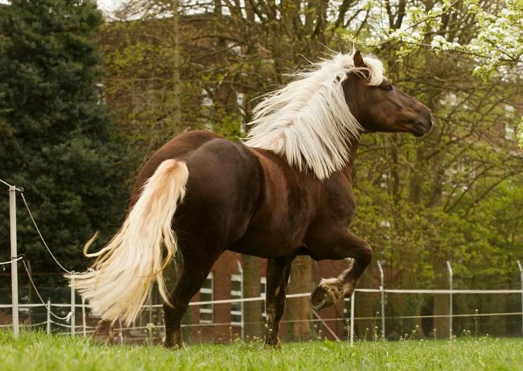 Black-Forest-Horse-Photos.jpg