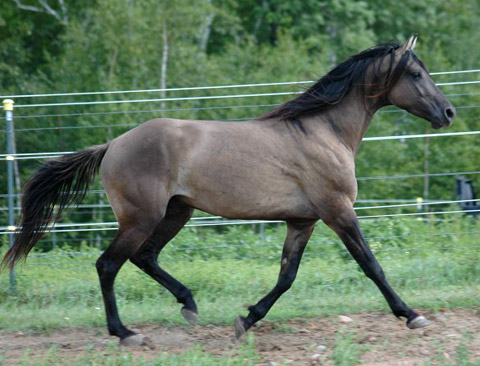 human use of horse steroids