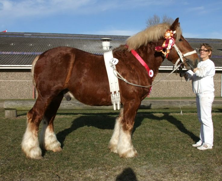 Horses: Pictures and Fun Facts About Horse