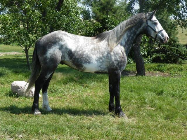 Nokota Horse Info, Origin, History, Pictures | Horse ... Theodore Roosevelt National Park