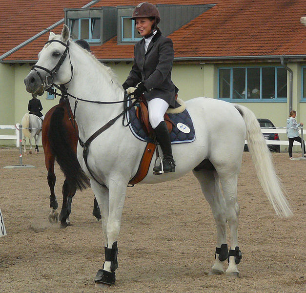 Al Ameen Arabians: Egyptian Arabian Horse Breeders ...