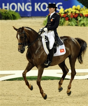 Arabian horse for the year 2015 in dressage ...