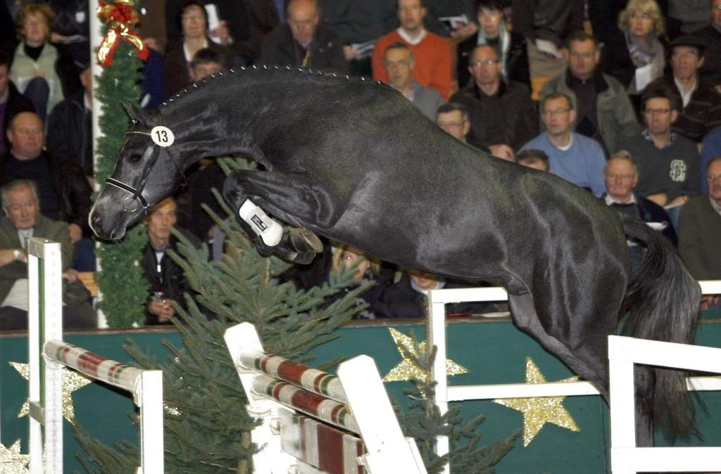 Westphalian Horse Breed Information History Videos Pictures