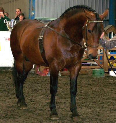 bay horse show - photo #38