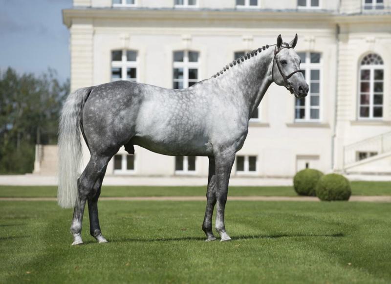 Hanoverian Horse Tumblr
