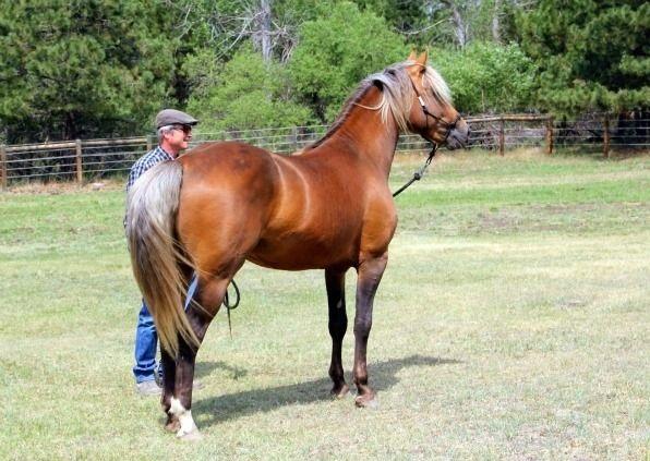 quarter horse head profile