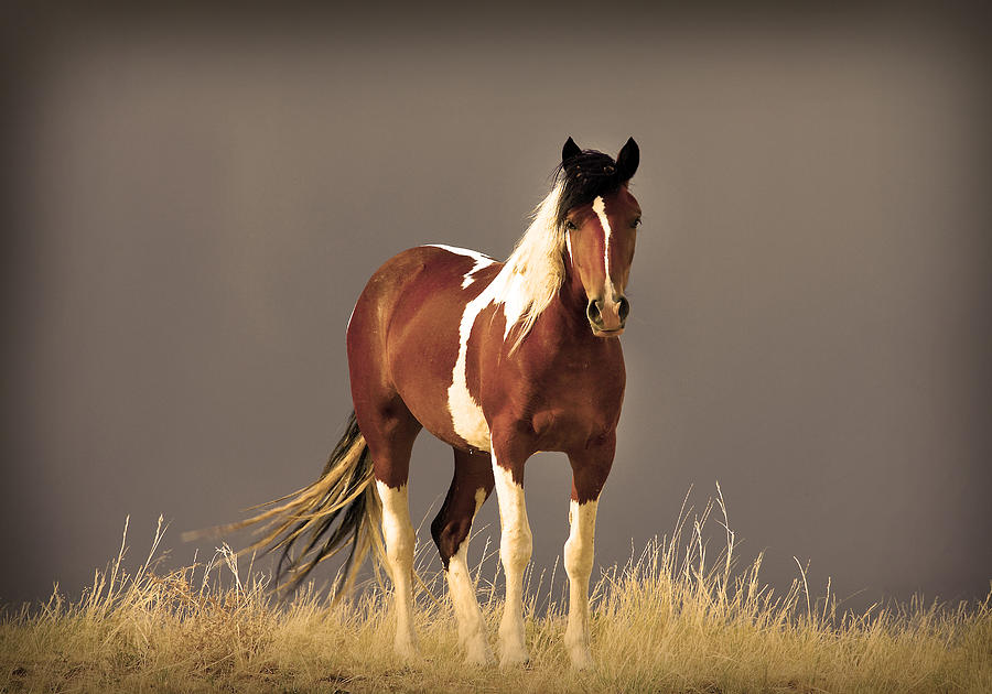 Mustang horse painting - photo#39