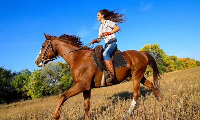 Mustang Horse Breed Information History Videos Pictures
